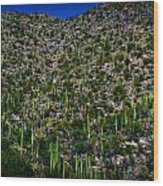 Saguaro Foothills Wood Print