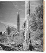 Saguaro Skeleton Bw Wood Print