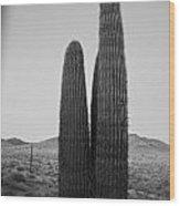 Saguaro's Eve Wood Print