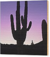 Saguro Cactus Wood Print by Barry Shaffer