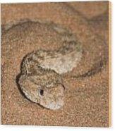 Sahara Sand Viper Cerastes Vipera Wood Print
