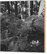 Saint Patricks Well Altadaven Favor Royal Forest Bullaun Stone County Tyrone Ireland Wood Print by Joe Fox