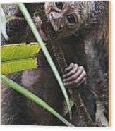Sak-monkey Wood Print