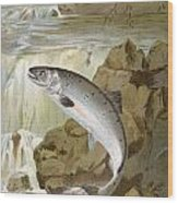 Salmon, C1900 Wood Print