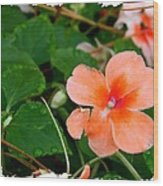 Salmon Impatiens And Dewdrops Wood Print