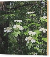Salmonberry Wood Print