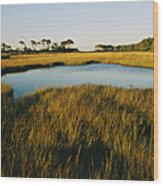 Salt Marsh, Assateague Island, Virginia Wood Print