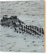 Salt Water Crocodile 3 Wood Print