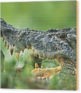 Saltwater Crocodile Crocodylus Porosus Wood Print by Cyril Ruoso