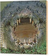 Saltwater Crocodile Crocodylus Porosus Wood Print