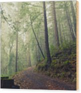 Sam Mcdonald County Park Wood Print