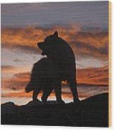Samoyed At Sunset Wood Print