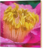 Sample-camellia Wood Print