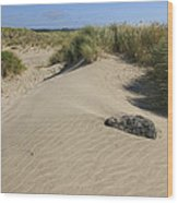 Sand And Grass Dunes Wood Print