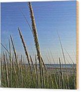 Sand Dune Grasses Wood Print