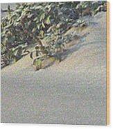 Sand Dune Greenery Wood Print