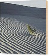 Sand Dunes, Death Valley, California Wood Print