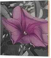 Sand Flower Wood Print