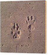 Sand Paws Wood Print