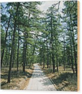 Sand Road Through The Pine Barrens, New Wood Print by Skip Brown