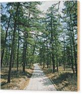 Sand Road Through The Pine Barrens, New Wood Print