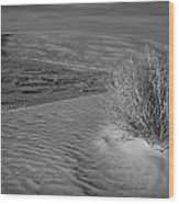 Sand Shrub 3 Wood Print