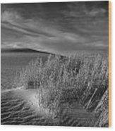Sand Shrub 4 Wood Print
