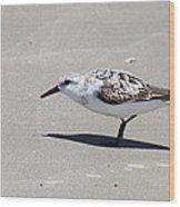 Sanderling On The Beach Wood Print