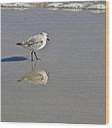 Sanderling Sandpiper - Calidris Alba  Wood Print