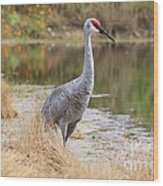 Sandhill Crane Beauty By The Pond Wood Print