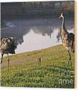Sandhill Crane Family Fun Wood Print