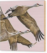 Sandhill Crane Family II Wood Print