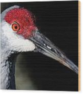 Sandhill Cranes Close Up Wood Print