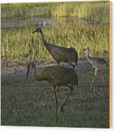 Sandhill Cranes Family Wood Print
