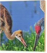 Sandhill Cranes Having Breakfast Wood Print