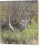 Sandhill Cranes In Colorful Marsh Wood Print