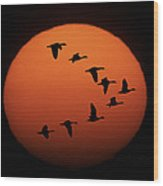 Sandhill Cranes Silhouetted Wood Print