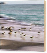 Sandpiper Evening Wood Print