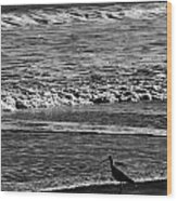 Sandpiper In The Surf Hc Wood Print