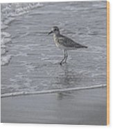 Sandpiper On The Shoreline Wood Print