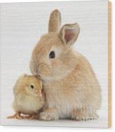 Sandy Rabbit And Yellow Bantam Chick Wood Print