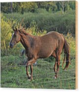 Sandy The Roan - C0058b Wood Print