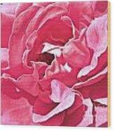 Sandys Pink Rose Frills Wood Print