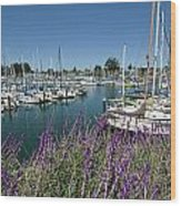 Santa Cruz Harbor - California Wood Print