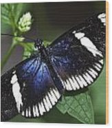 Sara Longwing Wood Print