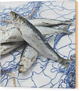 Sardines With Fishnet On White Background Wood Print