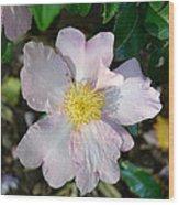 Sasanqua In Pink Wood Print