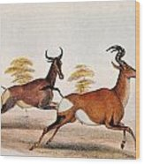 Sassaby And Hartebeest, Wood Print