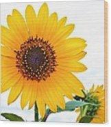Sassy Sunflower Wood Print