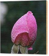 Satin Rosebud Wood Print